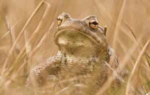 Frosch-im-Grass (Empfehlungen) as2